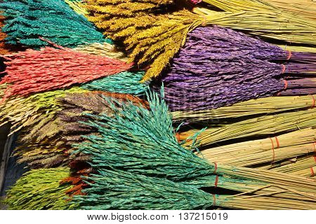 Colorful natural paddy rice dyed in red yellow and purple