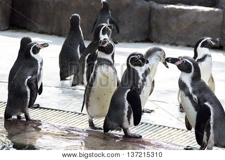cute penguin in the open zoo in Thailand
