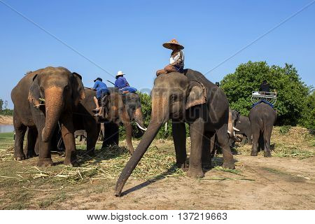Mahout  with Elephant on Chee Riverside SurinThailand.