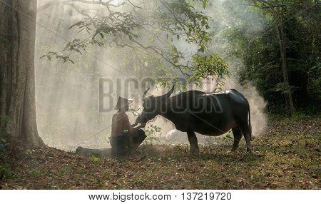 Asian Old Man farmer with buffalo in the wild.