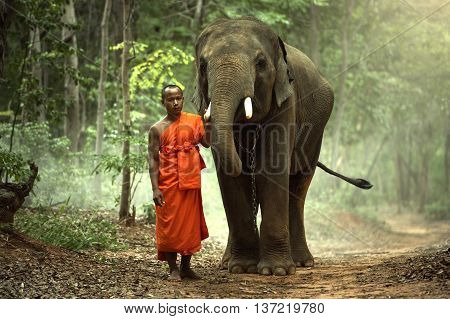 The monk with elephant in the wildlife