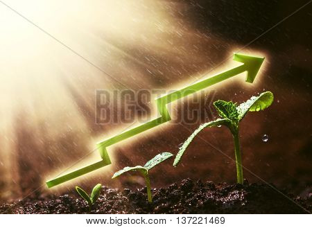 Green seedling growing on the ground in the rain. For business