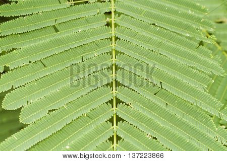 background nature green leaves little stalk bright