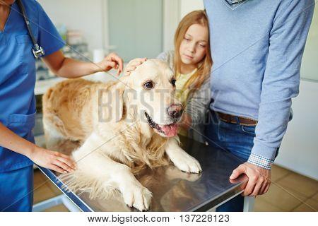 Bringing dog for checkup