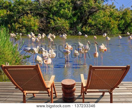 Park Camargue in delta of Rhone. Comfortable lounge chairs on wooden platform for rest and  birdwatching. Flock of pink flamingos in the shallow lake