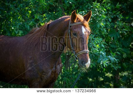horse resting after workout on a hot summer day