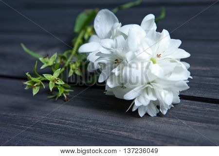 White flowers of jasmine on wooden background.Arabian jasmine flowers