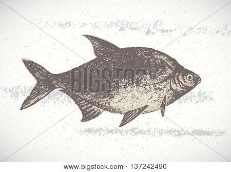Fish bream painted by hand. Vector illustration.
