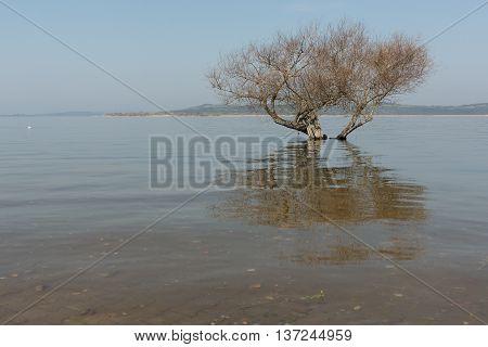 trees submerged in the flooded Ulubat lake, Bursa, Turkey