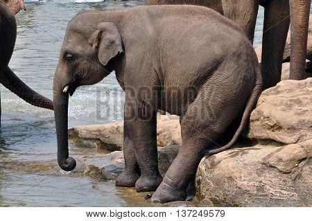 An elephant child sitting human-like on a rock