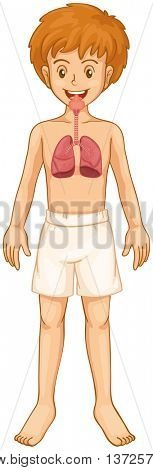Boy and respiratory system illustration