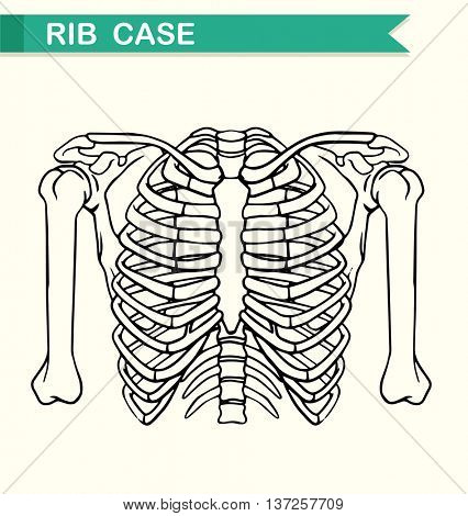 Diagram showing rib case illustration