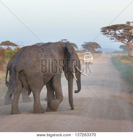 Family of elephants on dirt roadi in Amboseli national park, Kenya.