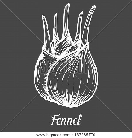 Fennel Root Plant. Hand Drawn Sketch Vector Illustration Isolated On Black. Spicy Herbs. Fennel Dood