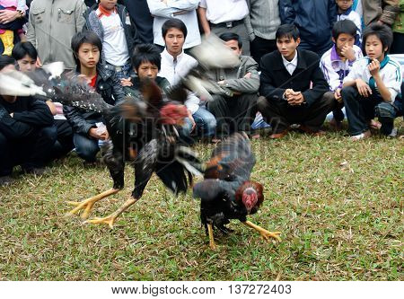 BAC Ninh, Vietnam, March 15, 2016 the youth group, entertainment, cockfighting, the village festival