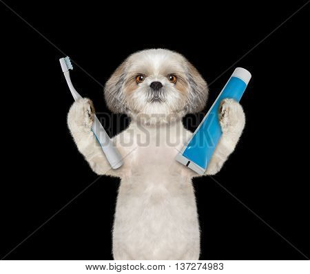 dog is going to clean the teeth -- isolate on black background
