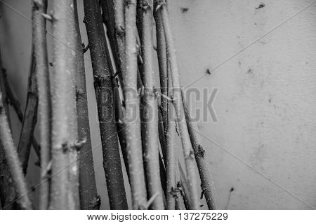 branch or timber or lumber or wood