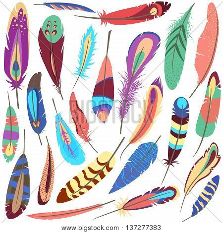 Set or collection of bird or flyer fluffy and colorful ornamental or decorative feather of american parrot or peacock that consists of vane and rachis, barb and afterfeather, hollow shaft and calamus