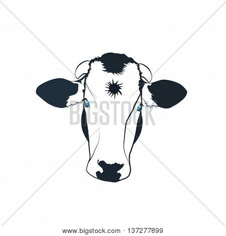 Black and white cow with blue eyes and a star on the forehead vector illustration