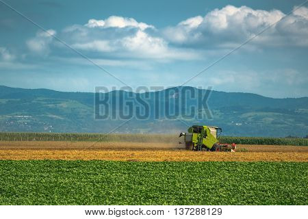 Combine harvester working in wheat field vast endless cultivated landscape is a background for agricultural machinery.