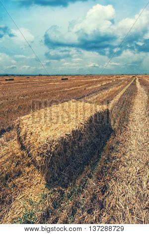 Wheat hay straw bales in field after harvest retro toned image