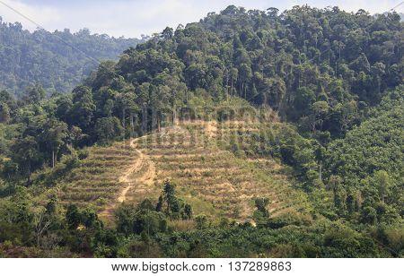 Deforestation. Logging of rainforest hillside