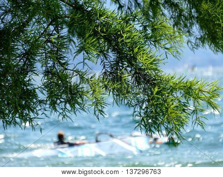 Green tree with in defocused background lake with swimming windsurfer
