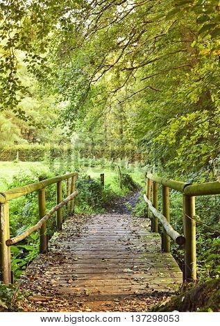 Idyllic summer scene, with golden evening sun and wooden footbridge over a little creek.