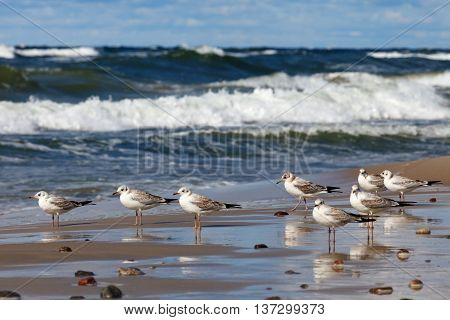 gulls sat on the sea during a summer storm