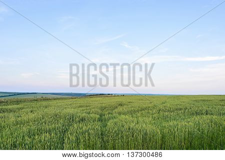 Beautiful landscape with green grain filed at sun set in moldova.