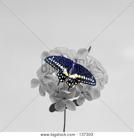 Butterfly On Blosson