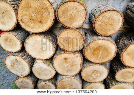Wood logs for industry. Pile of logs in forest
