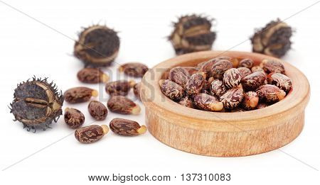 Castor beans with dry pods over white background