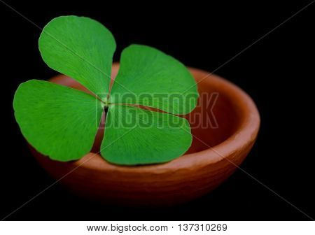 Clover leaf in a clay pottery on dark background
