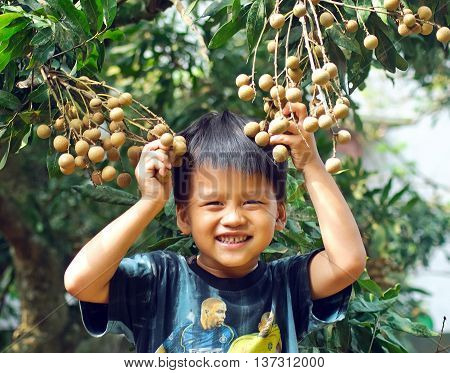 HUNG YEN, VIET NAM July 4, 2016: boy, laughing inside bunches of fruit, specialty longan, Hung Yen Province, Vietnam