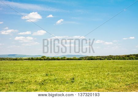 Field of green grass and sky. Background with cloudy sky and grass.