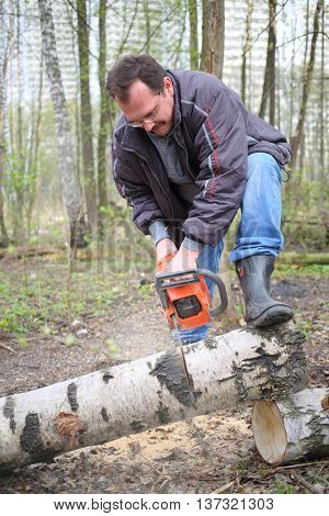 Workman sawing birch trunk using a chainsaw in the forest