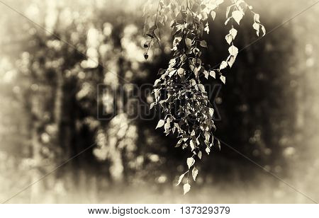 Horizontal right aligned sepia tree branch bokeh background