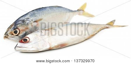 Close up of Tuna fish over white background