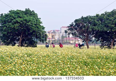 HA NOI, VIET NAM, December 25, 2015 children, on their way to school. Through field of flowers, suburban Ha Noi, Vietnam