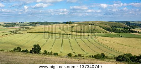 View of Middle Hill and Scratchbury Hill. Panorama from Battlesbury Hill with medieval strip lynchets on the edge of Salisbury Plain in Wiltshire UK