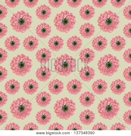 Seamless Floral pattern with pink zinnia flowers for print background