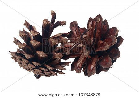 Two ripe seeds and reset pine cones on a white background