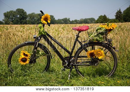 Bicycle with sunflowers between the spokes , wheat field in the background