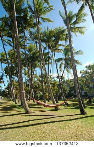 Summer beach with palm trees and a hammock