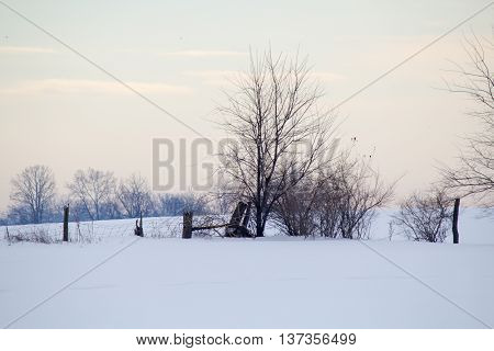 Fencerow In Winter Scene
