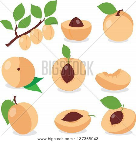 Apricot. Set apricots, apricot pieces, collection of vector illustrations on a transparent background