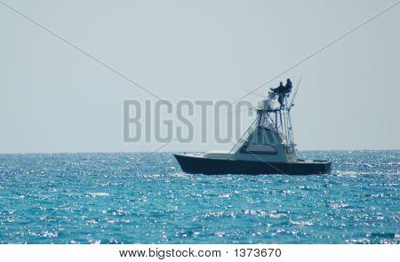 Cobia Fishing