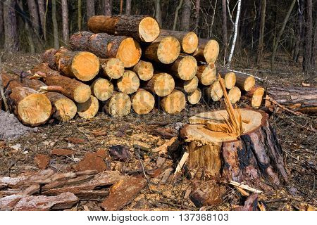 wooden logs and tree stump on meadow in forest