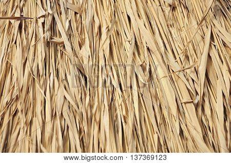 Reed Background, Close Up